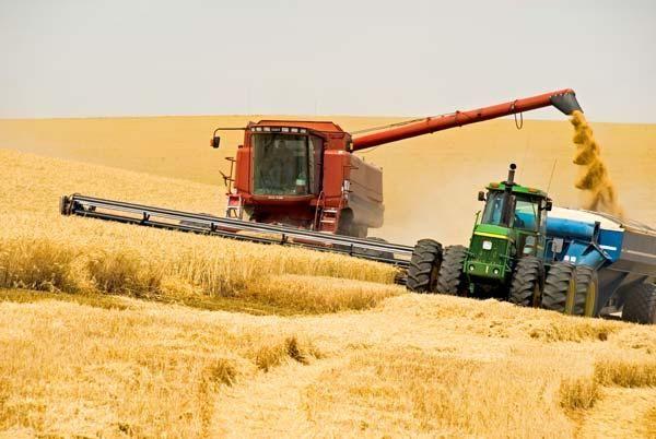 Подільські аграрії змолотили зерно