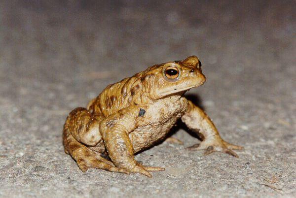 ToraKid - Удивительные лягушки